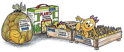 typedeplants