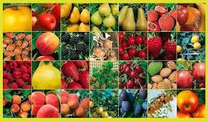 fruits verger