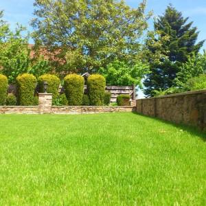 votre pelouse bienfaitrice pour la plan te gasco naturegasco nature. Black Bedroom Furniture Sets. Home Design Ideas