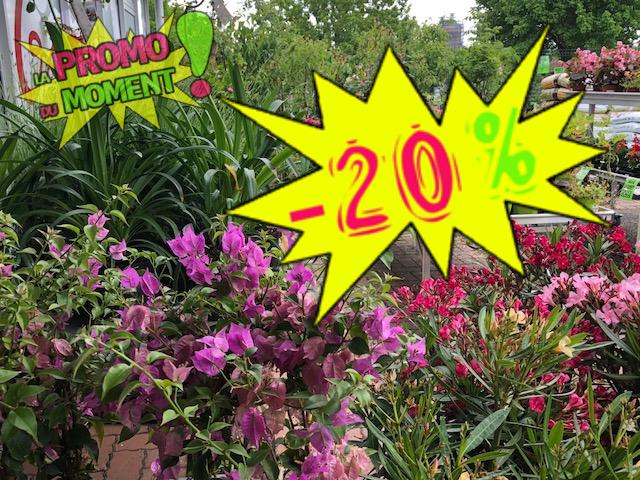 fleur-plante-20pct-alaune